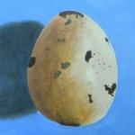 Single Blue Egg
